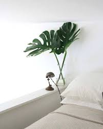 <b>Monstera</b> Deliciosa: Growing and Design Tips for a <b>Tropical</b> ...