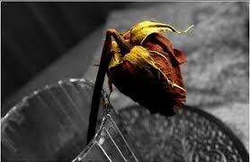 عندما   يُقابل الحب بالخيانة ..! Images?q=tbn:ANd9GcT_-y_zfTc6yhl0z3MImYTf0lHVCka5FuQxoN2GDySFKVtzDtw8