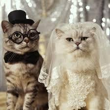 قط وقطه عريس و عروسه Images?q=tbn:ANd9GcT_4QfLWUY3utVw0rb0K8KYsH4jRm2a4FfdgVjaS2yVy6bqVsOM