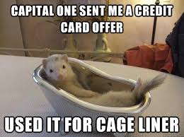 Capital one sent me a credit card offer Used it for cage liner ... via Relatably.com