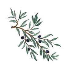 Resultado de imagen de ramas de olivo
