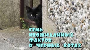 <b>Черные коты</b>. Семь неожиданных фактов. - YouTube