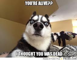 you're alive??... - Shocked Dog Meme Generator Captionator via Relatably.com