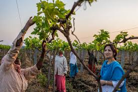 photo essay seven stories of women entrepreneurs cherie blair a company called fresh express logistics exporting locally harvested grapes from to europe nina joined our mentoring women in business programme