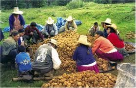 Resultado de imagen para campesinos trabajando el campo
