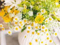 Wedding Daisy: лучшие изображения (14) в 2016 г. | Ромашки ...