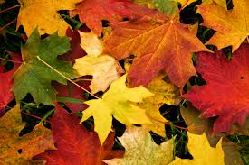 Image result for fall leaves public domain
