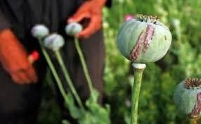 До суду спрямовано обвинувальний акт в кримінальному провадженні щодо мешканця, який на власному городі незаконно вирощував наркотичні рослини