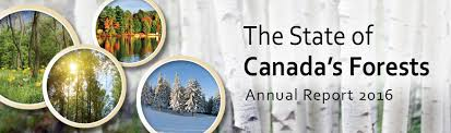 State of Canada's Forests Report | Natural Resources Canada