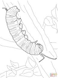 Small Picture Monarch Caterpillar coloring page Free Printable Coloring Pages