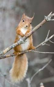 Squirrel | WT | Squirrel, Animals, <b>Squirrel feeder</b>