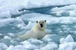 Resultado de imagen de conseqüències canvi climàtic
