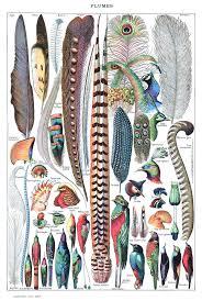 <b>Feather</b> - Wikipedia