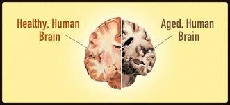 Imagini pentru old brain