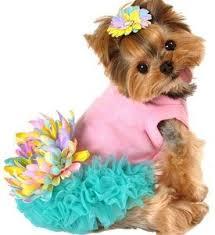 Pink <b>Dog Dresses</b> For Small Dogs Leilani <b>Cute</b> princess! | Adorable ...