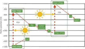 photosynthesis essays in biochemistry figure