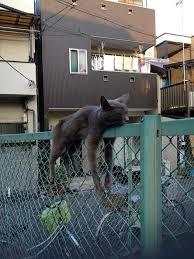<b>Zzz</b> - now that's a well balanced <b>cat</b>!   Животные, <b>Кот</b>