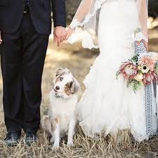 How to Include <b>Dogs</b> in <b>Weddings</b> (With Cute Photos) | Shutterfly
