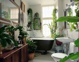 Image result for pictures of potted plants in our homes