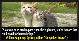 50 Famous Quotes About Cats - CatTime