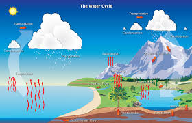 the water cycle   feature articlesillustration of the water cycle