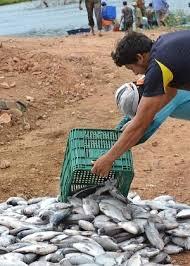 Resultado de imagem para imagens de receitas de peixes piau flamengo