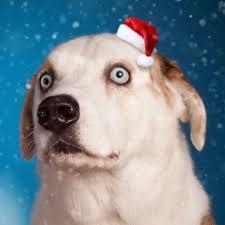 WeRateDogs® (@dog_rates)   Twitter