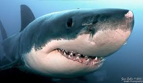 Image result for smiling sharks