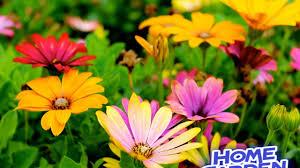 Who put the best plant in the summer || गर्मियों के सीजन में ...