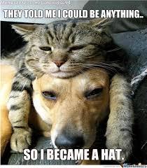 A Cat Is A Hat How Fancy Is That? by lunalovesu94 - Meme Center via Relatably.com
