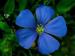 Slikovni rezultat za flower