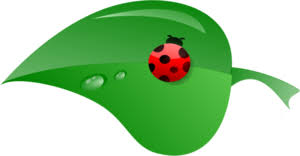 Image result for clipart small images lady birds
