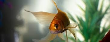 Узнайте — 4 популярных <b>аквариума</b> для начинающих ...