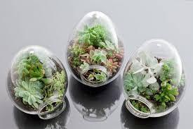 Resultado de imagen de imagenes de pequeños    jardines creados en recipientes o botellas
