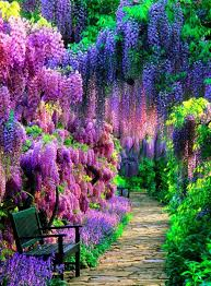 "Полностью Diy Алмазная <b>картина</b> ""Wisteria <b>Flower Garden</b>"" 5D ..."