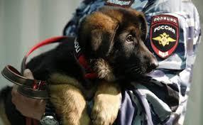 """Résultat de recherche d'images pour """"chienne offerte par la russie"""""""