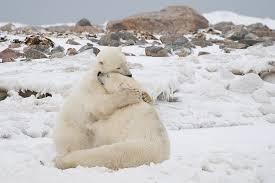Résultats de recherche d'images pour «hug américain»