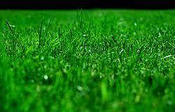 Bildresultat för gräs