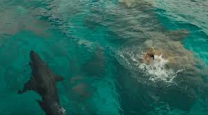Image result for the shallows