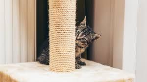Зоопсихолог рассказала о воспитании кошек | Новости ...