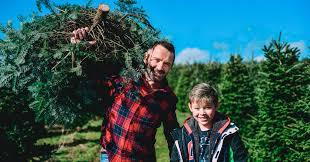 Gower Fresh <b>Christmas Trees</b>- premium supplier of <b>Christmas trees</b> ...