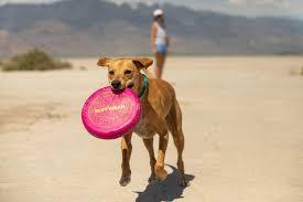 <b>Dog Toys</b> | Ultra Durable <b>Interactive Dog Toys</b> | Ruffwear Europe