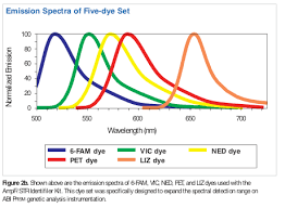 Directly tagging PCR primers with <b>fluorescent</b> dyes