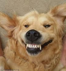 תוצאת תמונה עבור smile