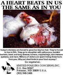 stop animal abuse essay   academic essayabuse animal cruelty chicken