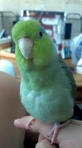 niches latini bathroom ajpg d a: parrotlets can be very curious read more about them at http www