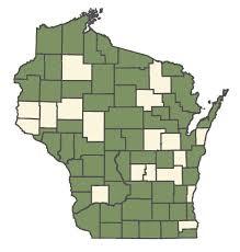 Bromus kalmii - Online Virtual Flora of Wisconsin