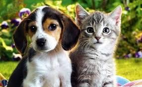 %name Codice della Strada: Omissione di soccorso per animali