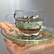 Beautiful things: лучшие изображения (1263) | Винтажный чай ...