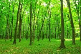 Výsledek obrázku pro zelený den
